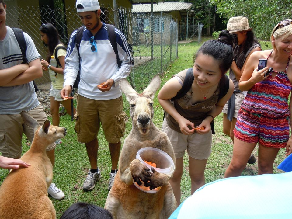 Feeding Jack the kangaroo in Queensland