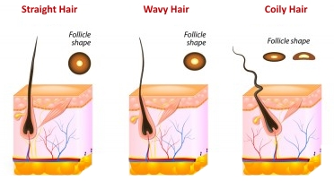 Follicle-Shape