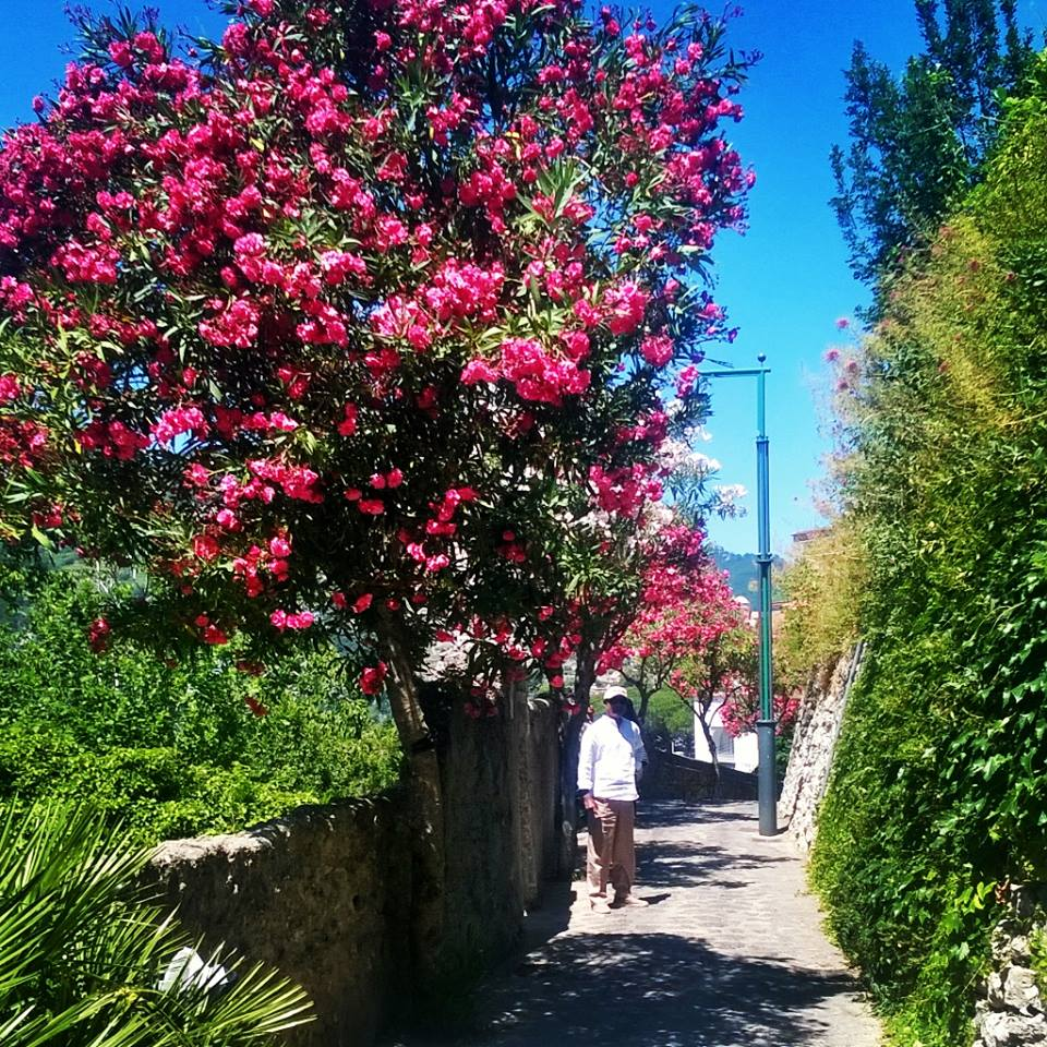 Flower Power: Bursts of colour along the walk to the Villa Cimbrone